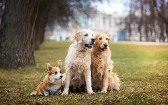 multi-dog