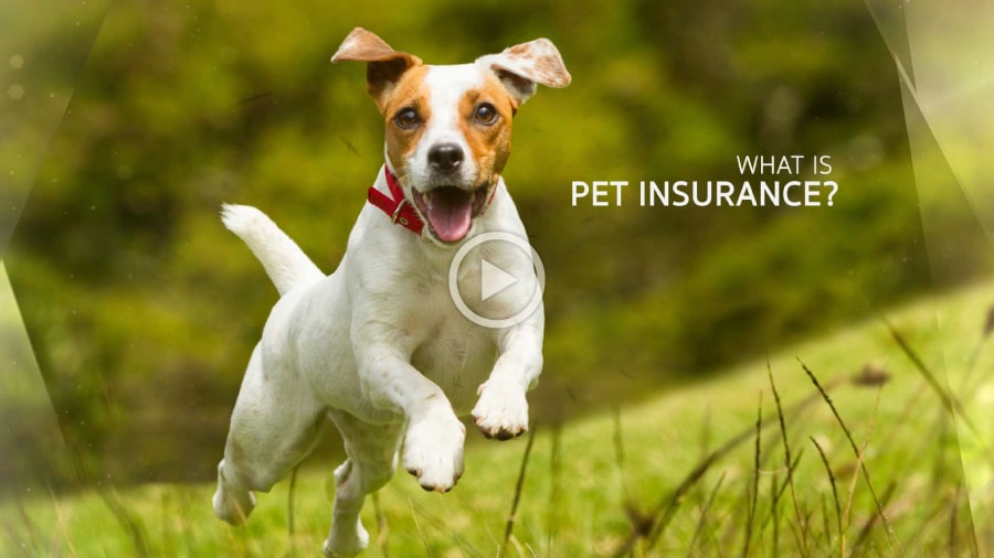 What is Pet Insurance | Companion Animal Clinic