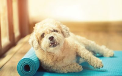 Puppy on Yoga Mat