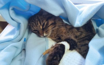 Sick Cat in Blanket