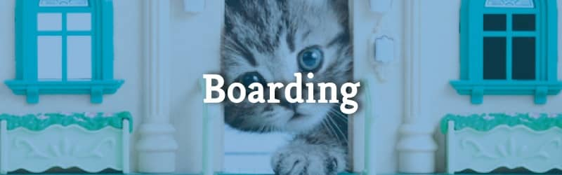 Boarding - Cat peeking in Door