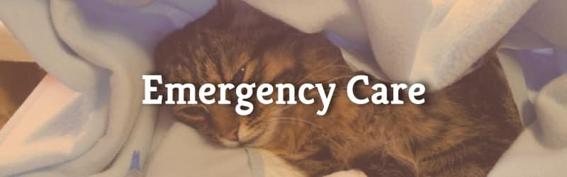 Emergency Care - Cat in Blanket