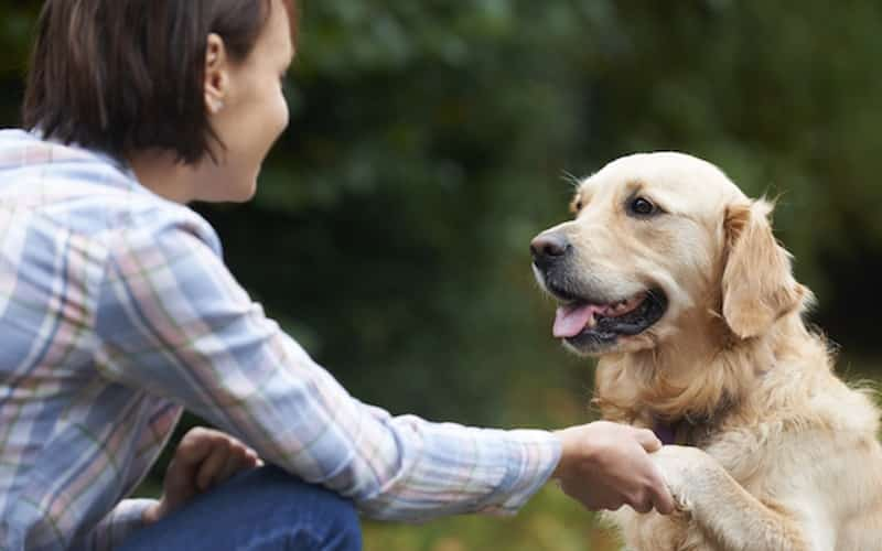 dog shaking hands behavioral counseling