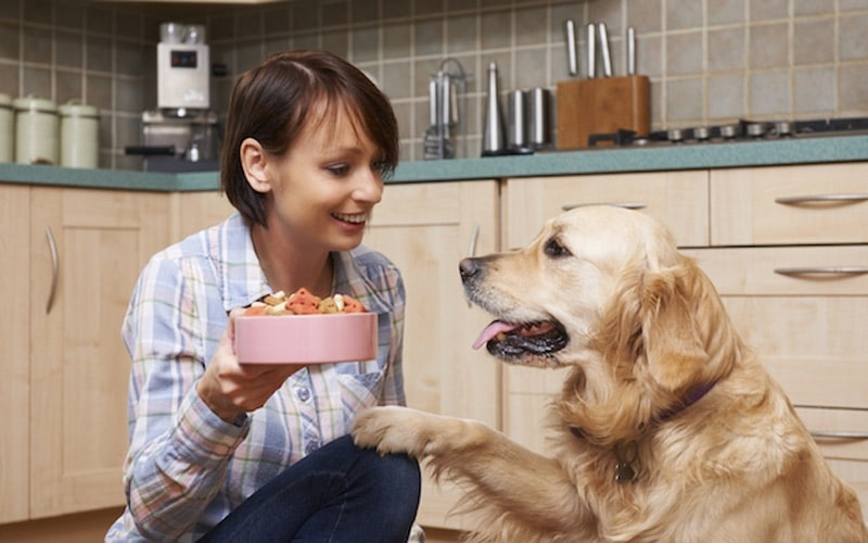 dog receiving food